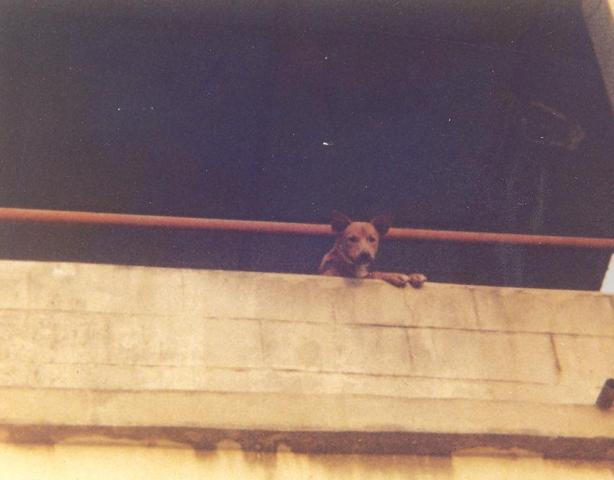 attachment_p_118694_0_sierra-leone-rooftop-photo-of-merrys-dog-001.jpg