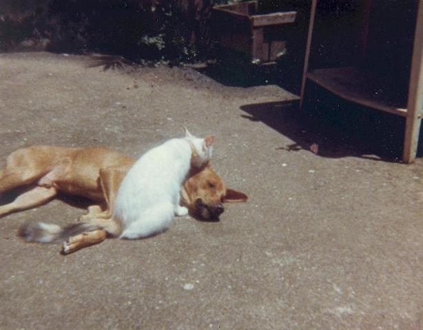 attachment_p_118694_1_sierra-leone-dog-and-cat-on-roof-001.jpg