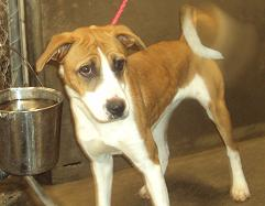 attachment_p_134134_0_b-mix-louisville-ky-shelter.jpg