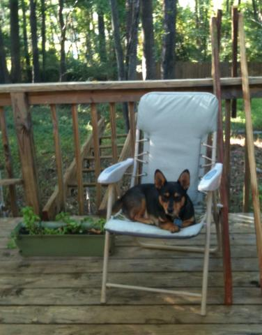 attachment_p_134948_0_deogie-lounging-on-deck-chair.jpg