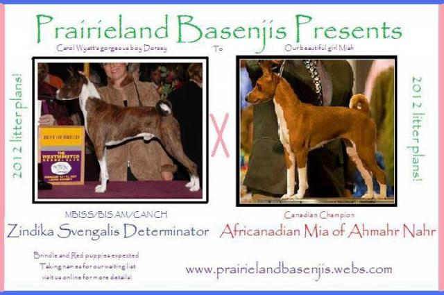 attachment_p_161086_0_breedingplans.jpg