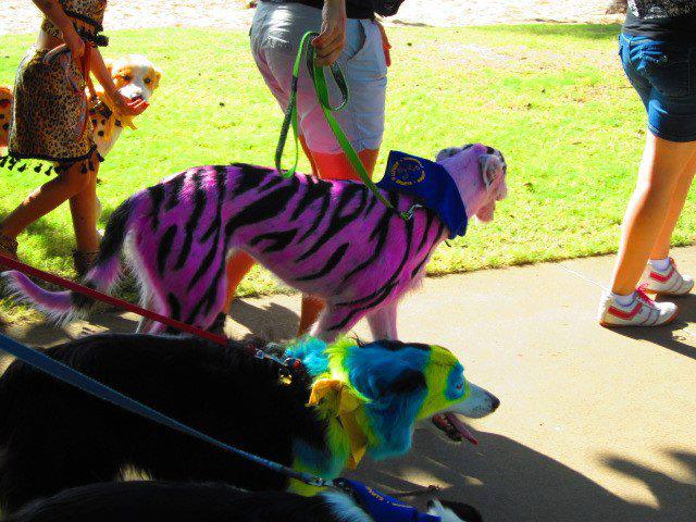 attachment_p_162667_5_pink-tiger-and-blue-and-yellow-dog.jpg