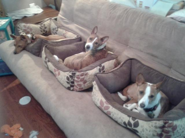 attachment_p_167492_0_couch-potatoes.jpg