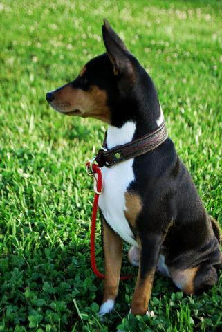attachment_p_171583_5_scout-sit-profile-m.jpg