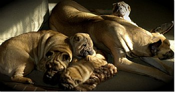 attachment_p_58205_0_dogs.jpg