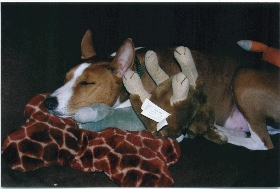 attachment_t_11149_1_kell-asleep-with-all-his-toys.jpg