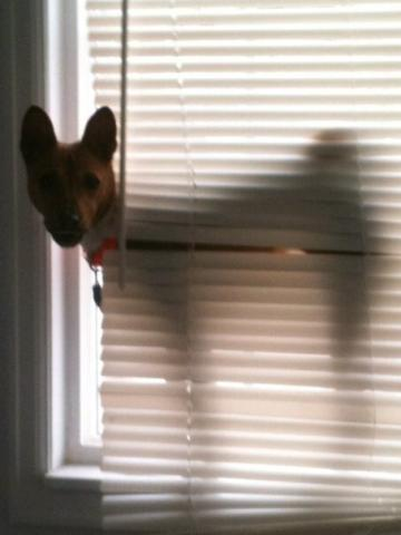 attachment_t_11263_2_pokey-blinds.jpg