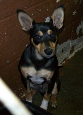attachment_t_12405_0_b-mix-rambo-sitting-estill-county-shelter-ravenna-ky.jpg