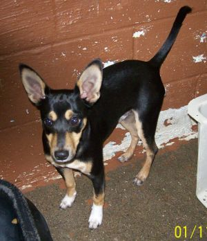 attachment_t_12405_1_b-mix-rambo-standing-estill-county-shelter-ravenna-ky.jpg