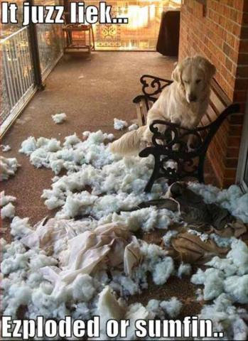 attachment_t_14881_0_funny-animal-3-dog-mess.jpg