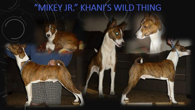 Posts made by khanis | Basenji Forums - Your Online Basenji Community