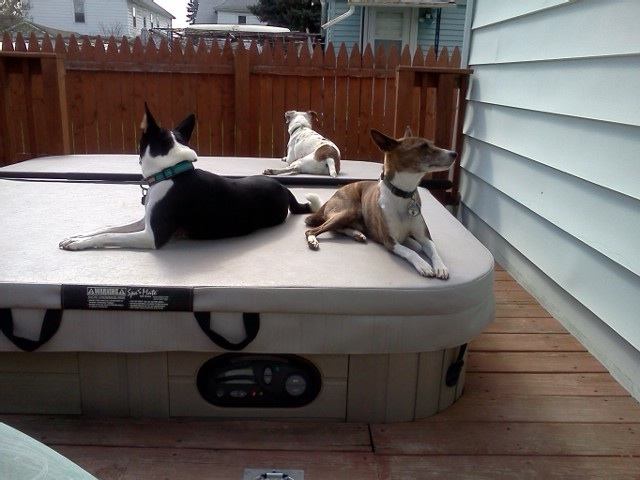 attachment_t_16327_0_dogs-relaxing-on-the-spa.jpg