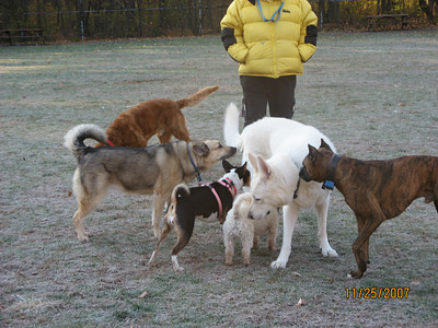 attachment_t_2507_1_lillie-and-friends-at-park.jpg