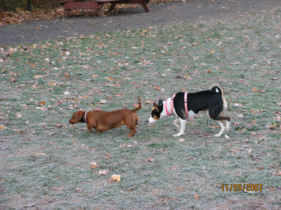 attachment_t_2507_4_lillie-getting-to-know-a-dachschund.jpg
