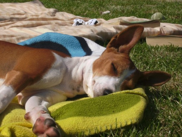 attachment_t_6218_1_eesh-sunbath2.jpg