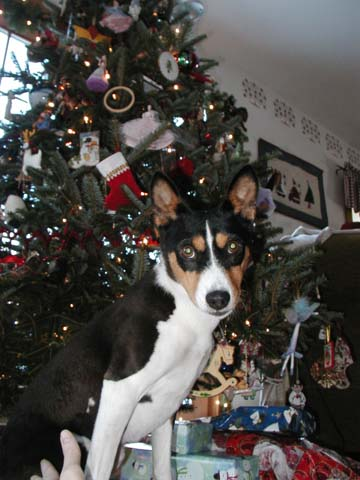 attachment_t_667_0_nala-christmas-2006.jpg