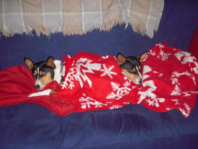 attachment_t_7540_0_pigs-in-a-blanket.jpg