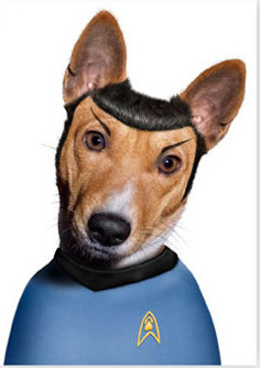 attachment_t_9776_0_basenji-spock.jpg