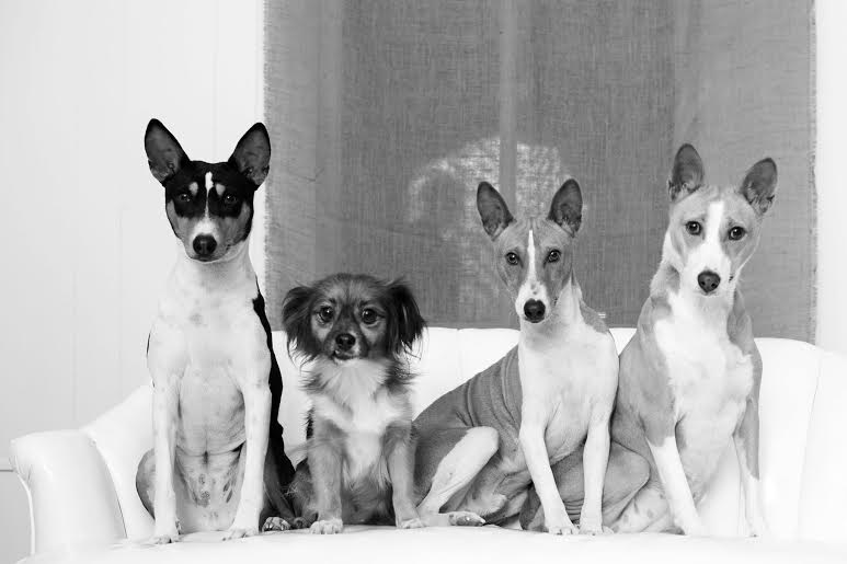 0_1464793820124_Best basenji picuture.jpg