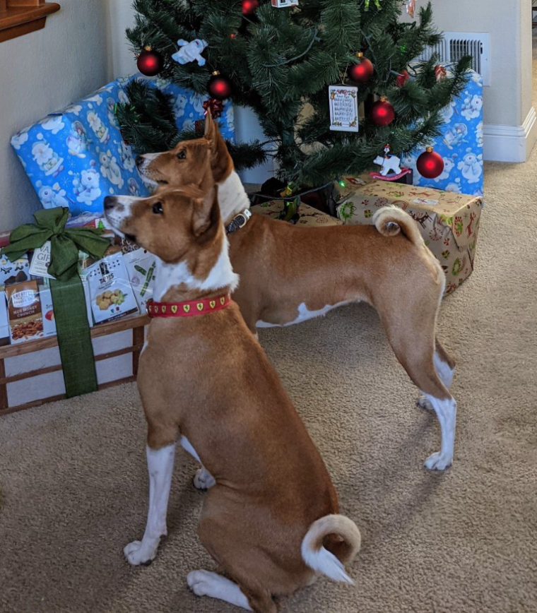 0_1608150065090_Christmas Dogs (Medium).jpg